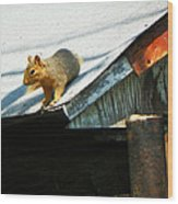 Squirrel On A Hot Tin Roof Wood Print