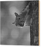 Squirrel On A Tree Wood Print