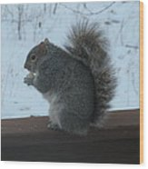 Squirrel Snack Wood Print
