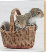 Squirrels In A Basket Wood Print by Mark Taylor