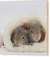Squirrels In Santa Hat Wood Print