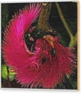 St Kitts Flora Wood Print