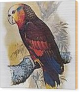 St Vincent Amazon Parrot Wood Print
