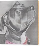 Staffordshire Terrier  Wood Print