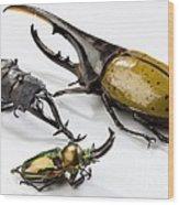 Stag Beetles Wood Print