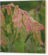 Staghorn Sumac Wood Print