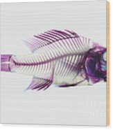 Stained Rockbass Fish Wood Print