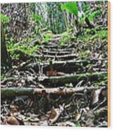 Stairs In The Forest Wood Print by Jenny Senra Pampin