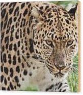 Stalking Amur Leopard Wood Print
