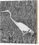 Stalking Egret Wood Print