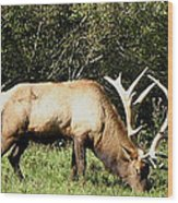 Stand Alone Elk Wood Print