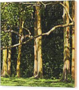 Stand Of Rainbow Eucalyptus Trees Wood Print