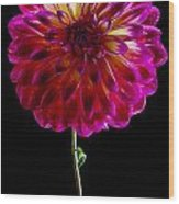 Stand Up Dahlia Wood Print