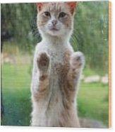 Standing Cat Wood Print