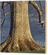 Standing Strong Oak Tree And Storm Clouds Wood Print