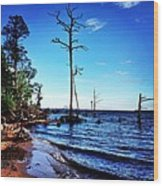 Standing Tall Goose Creek State Park Wood Print by Joan Meyland