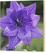 Star Balloon Flower Wood Print