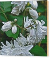 Star Cluster Flowers Wood Print