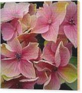 Star Flowers Wood Print