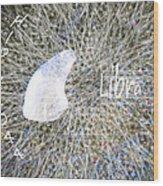 Star Hip 71044  Wood Print by Augusta Stylianou