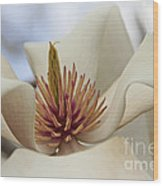 Star Magnolia Wood Print