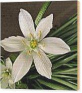 Star Of Bethleham Wood Print