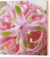 Star Of The Show Hyacinth  Wood Print