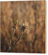 Star Thistle Wood Print
