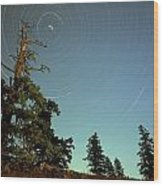 Star Trails, North Star And Old Douglas Wood Print