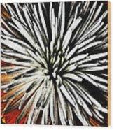 Starburst Wood Print by Yvonne Scott