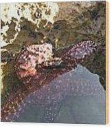 Starfish Ca Tidepools Wood Print