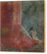 Stargazing Hummer Wood Print by Cindy Wright