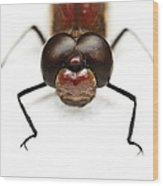 Staring At Red Dragonfly Wood Print