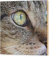 Staring Cat Wood Print