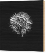 Stark Puff Wood Print