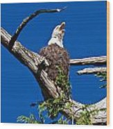 Squawking Alaskan Eagle Wood Print