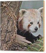 Stealthy Red Panda Wood Print