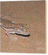 Stenodactylus Petrii Or Dune Gecko Wood Print
