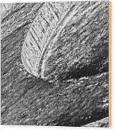 Steps Of Education Wood Print