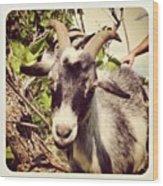 Steve My Goat Wood Print
