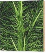 Stinging Hairs On A Nettle Leaf Wood Print