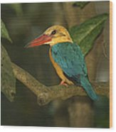 Stork-billed Kingfisher Perched Wood Print