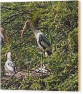 Storks Around A Nest Wood Print