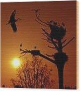 Storks Wood Print by Carlos Caetano