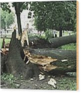Storm Damage Wood Print