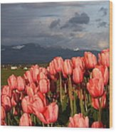 Stormin' Tulips Wood Print