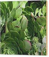 Strand Succulent Wood Print