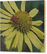Strawberry Moth On A Yellow Flower Wood Print