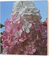 Strawberry Vanilla Hydrangea Wood Print