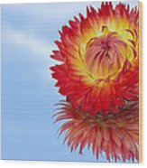 Strawflower Reflection Wood Print